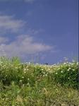 茂み-02.jpg